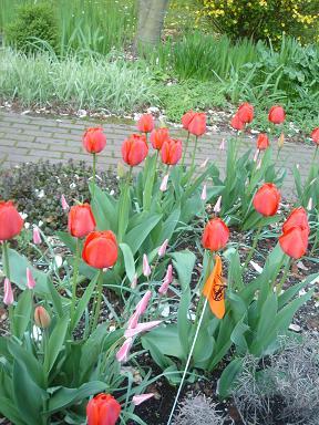 NY.Apr.2009 075
