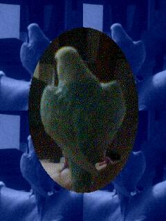 tiro_20090212153953.jpg