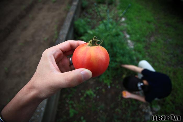 我が家で出来たトマト