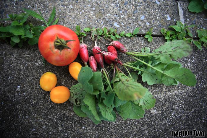 我が家で出来た野菜