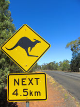 これぞオーストラリア!!みっけえええええええ!!