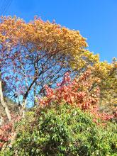 高山ですもの、紅葉もしますよ。4色がいいでしょ