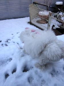 かのん 雪