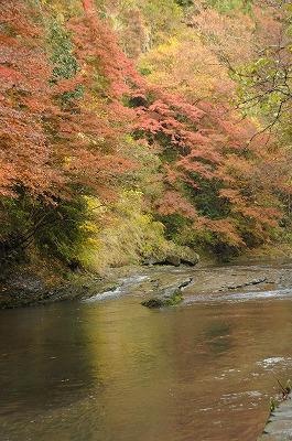 20081129養老の滝散策 061-1