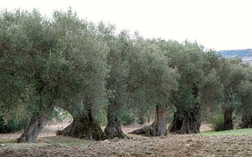木の顔1-0b