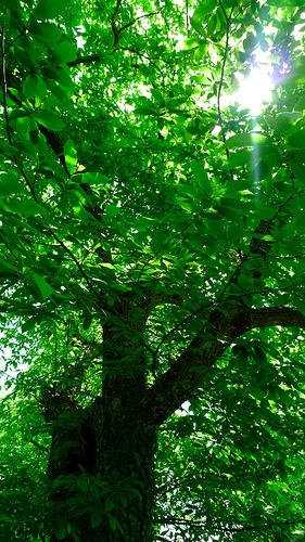 木の顔1-6