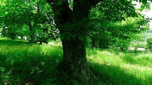 木の顔1-5