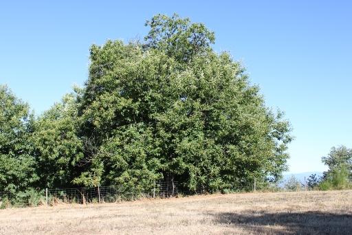 木の顔1-4