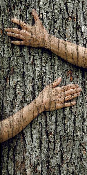 木の顔2-2