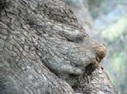 木の顔35