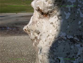 木の顔34