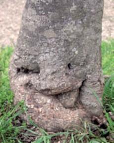 木の顔33