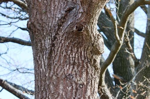 木の顔36