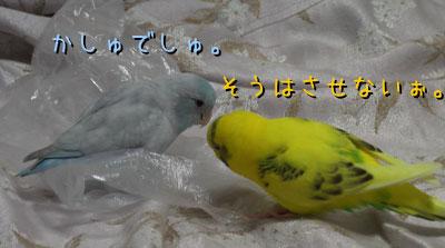 popomumu91.jpg