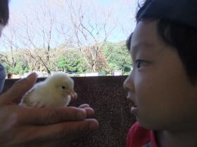 2011-10-27 智光山公園 029 (280x210)
