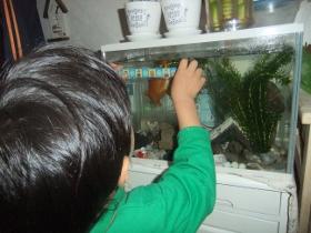 2011-12-05 金魚の大きさをはかる 009 (280x210)