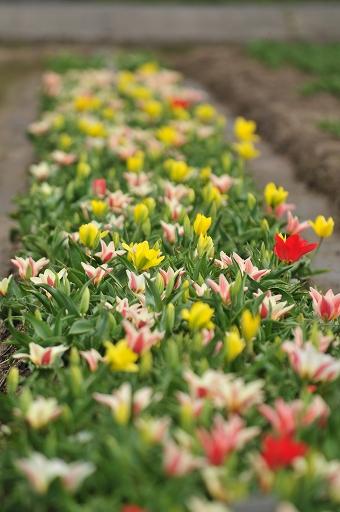 早咲きの種か?