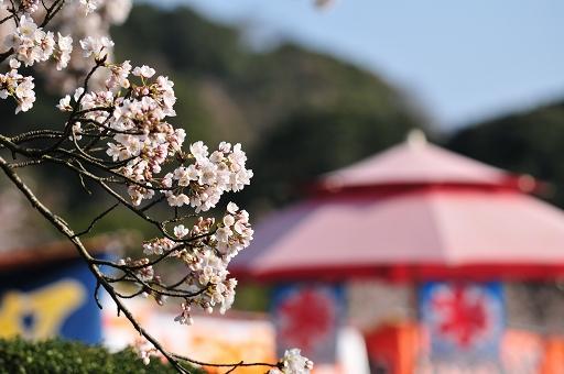 一応「桜まつり」である