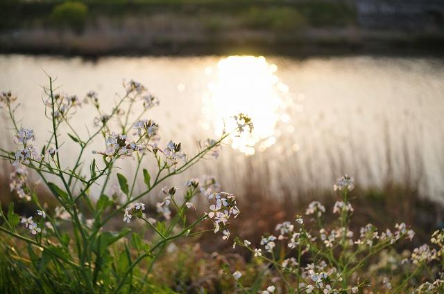 夕日の反射