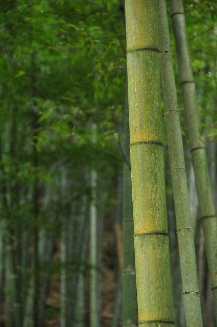 竹は落ち着く