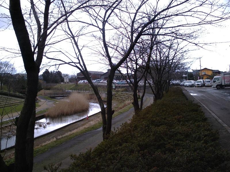 早春の新津川・・・・・もうすぐ桜が・・・・・