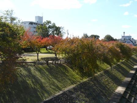 石手川公園の紅葉 1