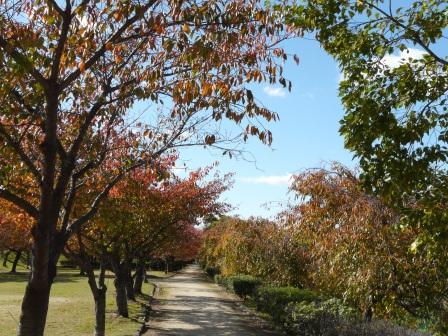 石手川公園の紅葉 2