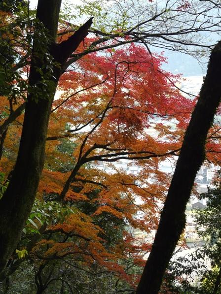 白滝公園の紅葉 2