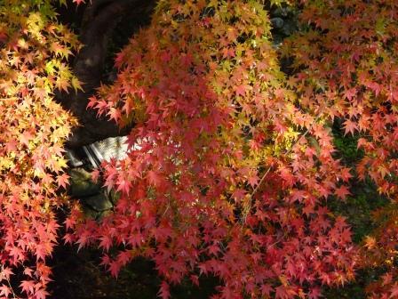 白滝公園の紅葉 3