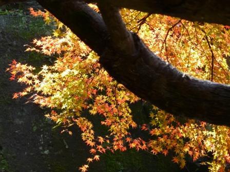 白滝公園の紅葉 4