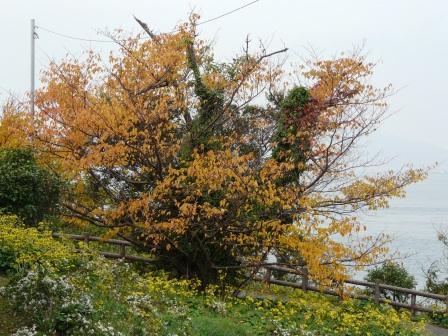大角海浜公園の紅葉 1