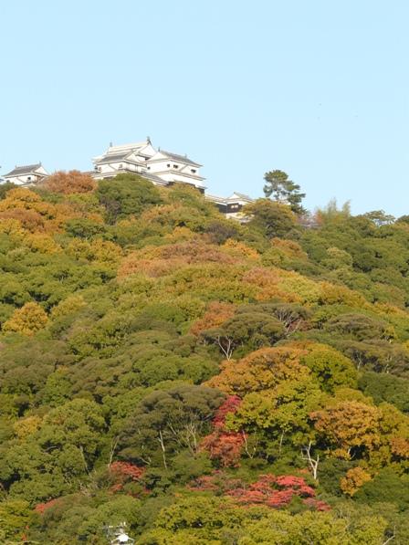 お城山の紅葉