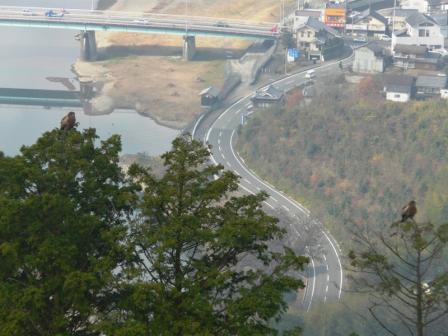 冨士山のトビ 1