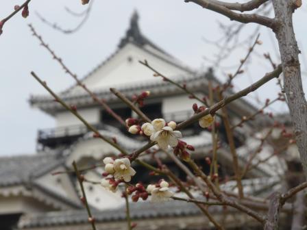 松山城と白梅