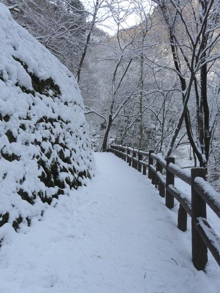白猪の滝 遊歩道