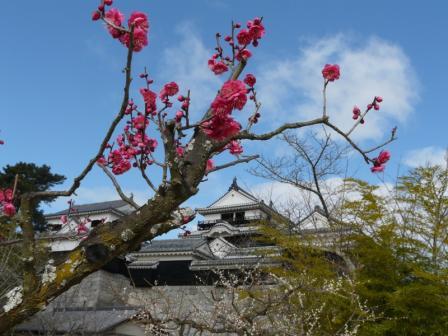 松山城 天守閣と梅 1