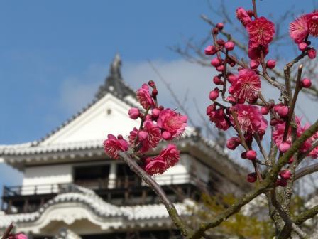 松山城 ―天守閣と梅 2