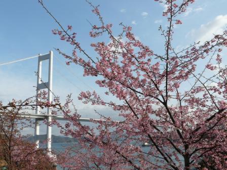 サンライズ糸山 河津桜 1