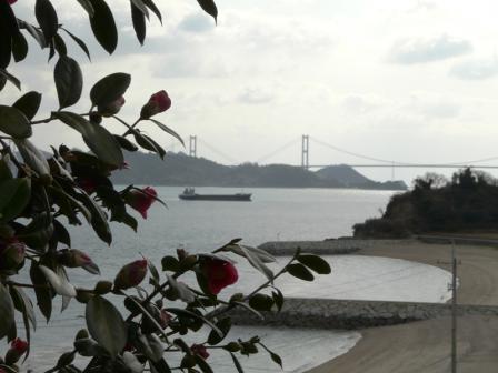 大角海浜公園 椿と来島海峡大橋