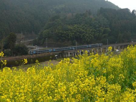 中山 菜の花と2000系特急気動車