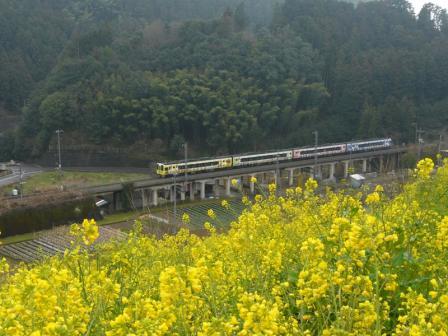 中山 菜の花と2000系・アンパンマン列車