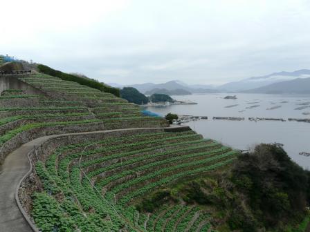 遊子・水荷浦の段畑 3