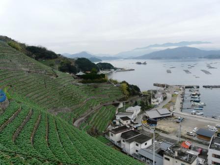 遊子・水荷浦の段畑 7