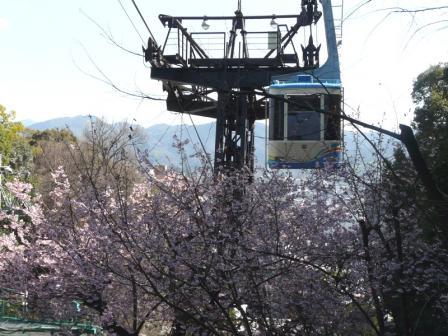 城山 椿寒桜とロープウェイ