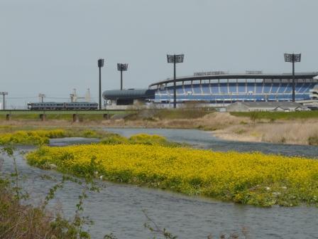 坊っちゃんスタジアム と 列車・185系