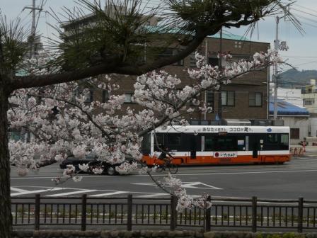 桜と市内電車 1