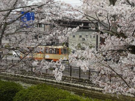 桜と市内電車 2