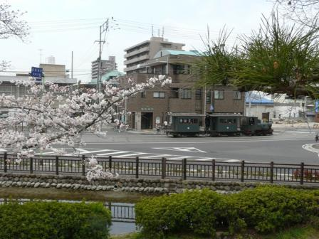 桜と坊っちゃん列車 2