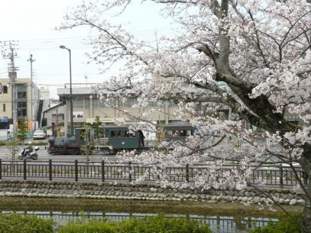 桜と坊っちゃん列車 3