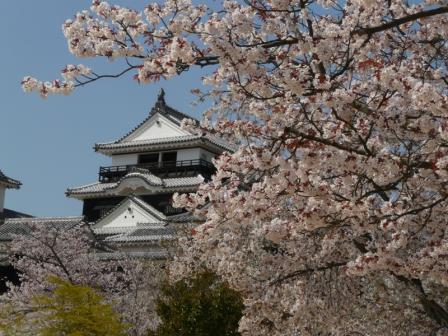 松山城 天守閣と桜 1